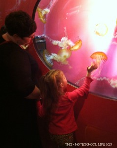 jellies exhibit at shedd aquarium